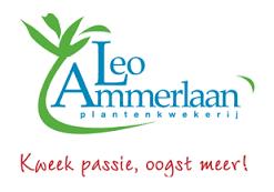 Plantenkwekerij Leo Ammerlaan