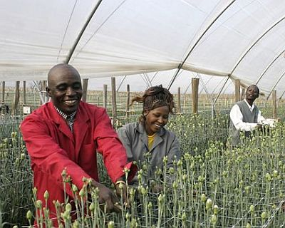 Production_Carnations_People_6